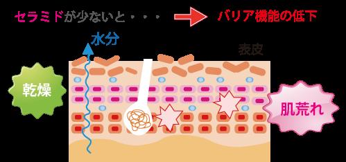 細胞間脂質セラミド☆川越市鶴ヶ島市の漢方薬局坂重薬局