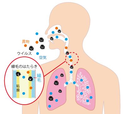 肺の免疫システム☆川越市鶴ヶ島市の漢方薬局坂重薬局