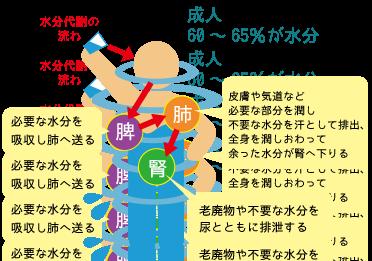 水分代謝の流れ☆川越市鶴ヶ島市の漢方薬局坂重薬局