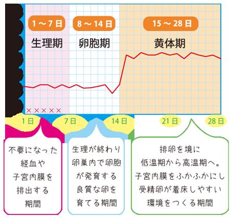 周期法と基礎体温表