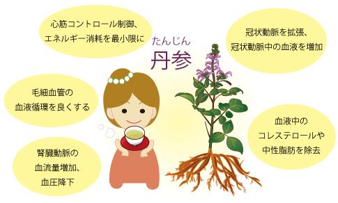 丹参(たんじん)漢方相談の坂重薬局
