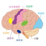 脳アンチエイジング