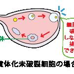 黄体化未破裂卵胞(LUF)